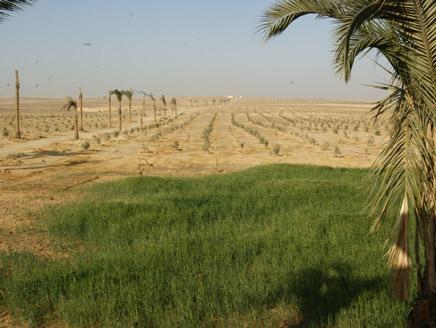 أراضي مصر المنهوبة