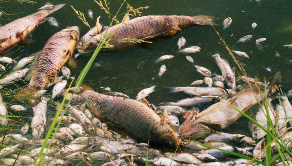lake-fish-killrrrr